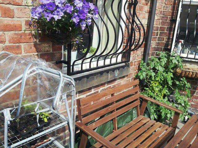 Greenhouse, tomatoes and hanging basket
