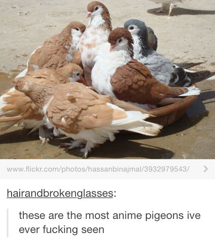 Reminds of that one pigeon dating sim called Hatoful Boyfriend. So animu.