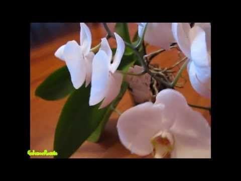 Как заставить орхидею цвести: способы и фото