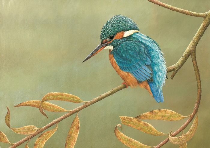 """Kingfisher on Willow"" ~ Oil Painting by Robert Fuller, one of Britain's Foremost Wildlife Artists ...."