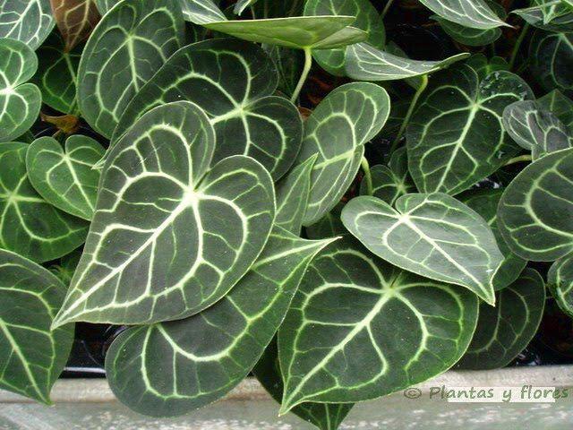 Resultado de imagen para plantas ornamentales