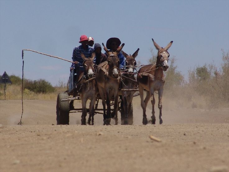 Donkey cart on the move - #Namibia #Africa #Transport
