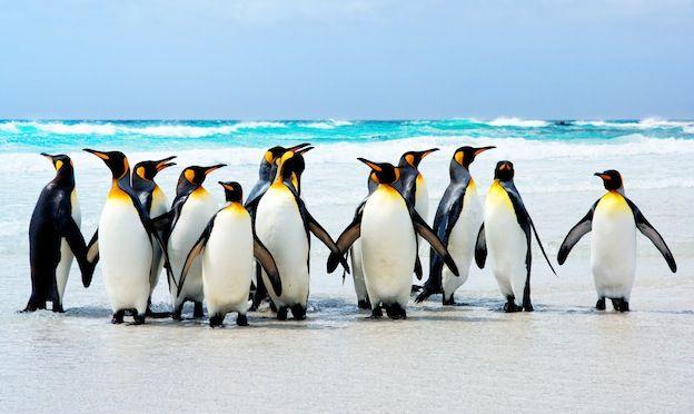 Penguin Habitat - Penguin Facts and Information