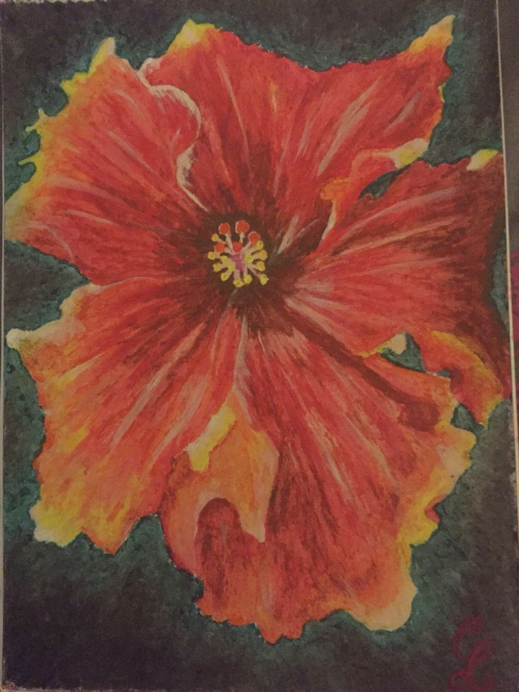 Hibiscus by Carolyn Lopes ( oil pastel and acrylic mix)