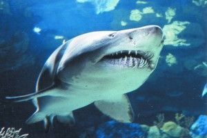 Camden Aquarium Sharks | Camden Aquarium Coupons