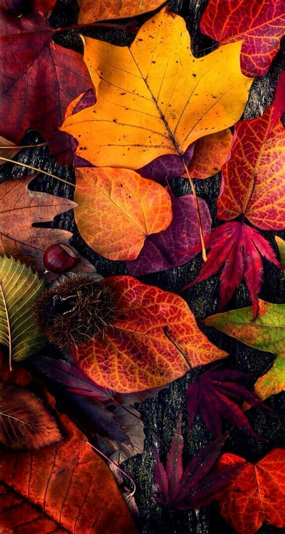 Красивые картинки на телефон осень на доске