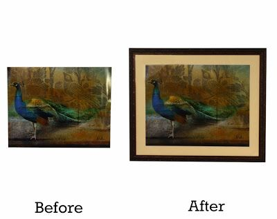 A Good Frame Of Mind Before And After Vivid Peacocks Get Opposite
