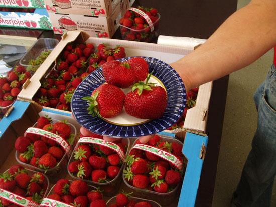Koivistoisen Mansikkapaikka in Lahti - an excellent place to pick your own strawberries.