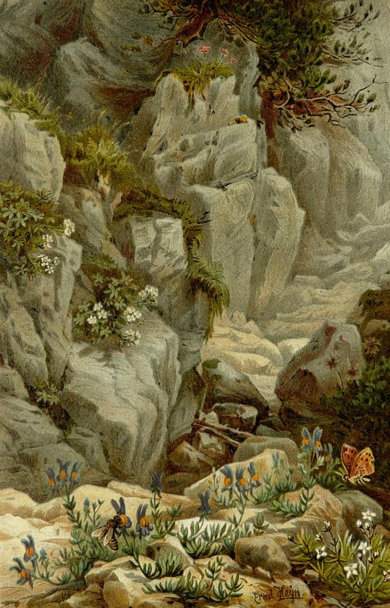 1887 Antique fine lithograph of a MOUNTAIN LANDSCAPE with Alpine Flowers and a Butterfly. 125 years old print.