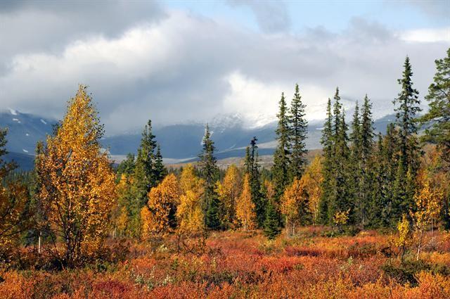 Autumn in Sarek national park, Sweden