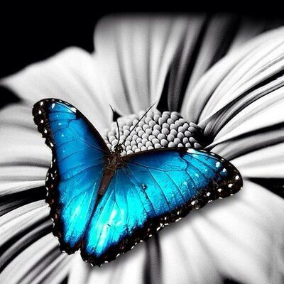 蝶園「バタフライサンクチュアリ」およそ2000羽の蝶が飛んでいる。ケアンズ 旅行・観光でおすすめのスポット!