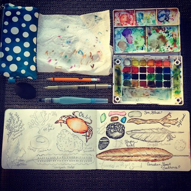 Gorgeous evening light for documenting things found on Puget Sound. #naturejournal #drawingnature #summer #pugetsound #sketchbook #theydrawandtravel