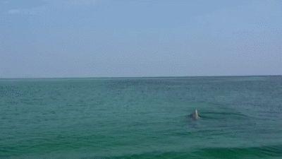 ஜ۩۞۩ஜ Azulestrellla ஜ۩۞۩ஜ: ► Animales acuáticos de nuestros Océanos ◄