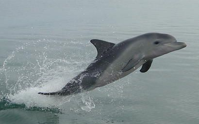 Mandurah Dolphins | About the dolphins