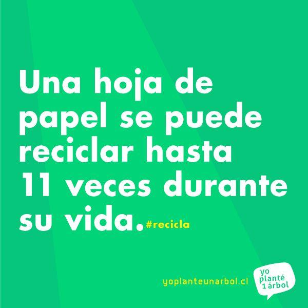 Una hoja de papel se puede #reciclar hasta 11 veces durante su vida convirtiéndose en distintos tipos de papel y cartón dependiendo de estado de sus fibras.