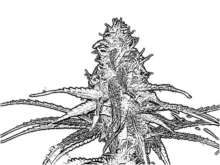 42 best color pages images on pinterest mandalas for Cannabis fantasy cool coloring book pages
