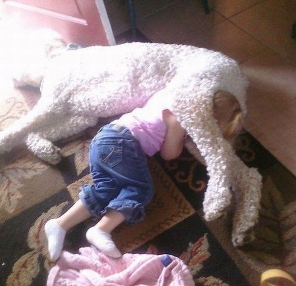 Best Kids Sleep In The Darndest Places Images On Pinterest - 30 adorable dogs sleeping awkward positions
