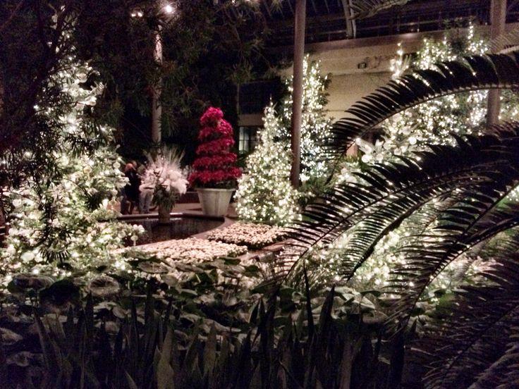 winter through palm trees longwood gardenspalm treeschristmas lightschristmas ideaschristmas - Longwood Gardens Christmas Lights