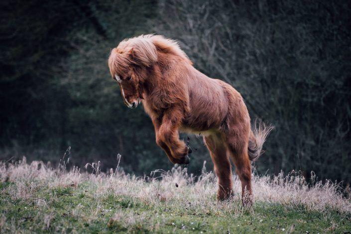 Fotos Pferde In Der Natur I In 2020 Pferde Niedliche Pferde Pferde Fotografie