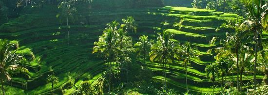 The awesome rice terraces after the rains in March