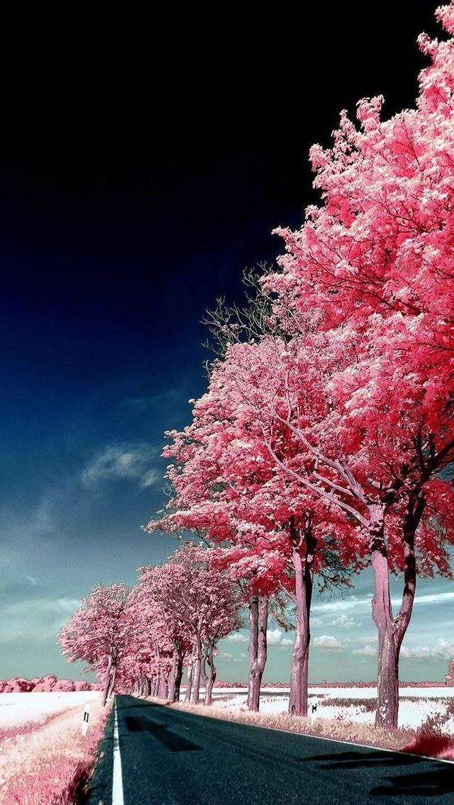 Roadside Pink Trees #iPhone #5s #Wallpaper