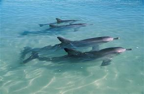 10. Swim with dolphins, Monkey Mia Perth