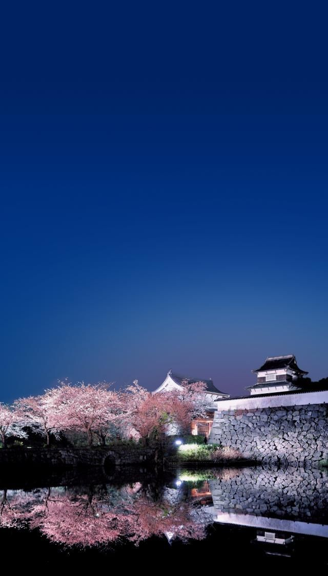 """Fukuoka Castle Sakura Festival 2013"" in Maizuru Park, Fukuoka's famous cherry blossom viewing spot (Japan)"