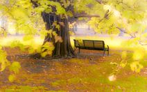 Before and After #1 How to Create a foggy autumn scene