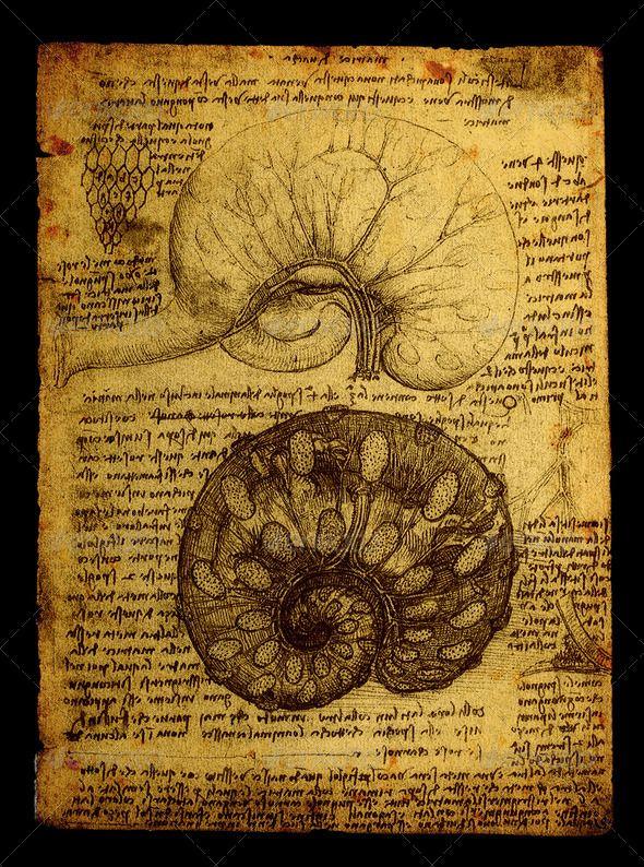 63 Best Leonardo Da Vinci Anatomy Drawings Images On Pinterest