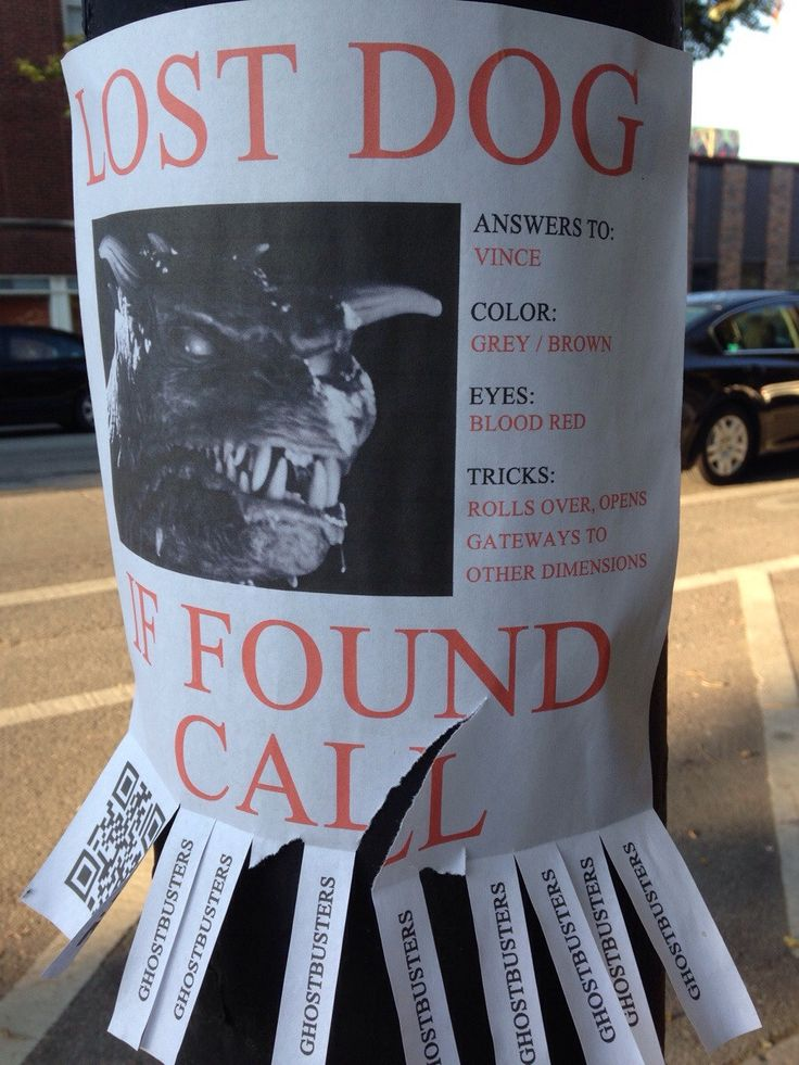41 best Take One, images on Pinterest Funny things, Ha ha and - lost pet flyer maker