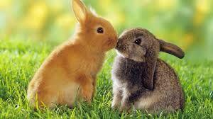 2 konijnen die elkaar een kusje geven.