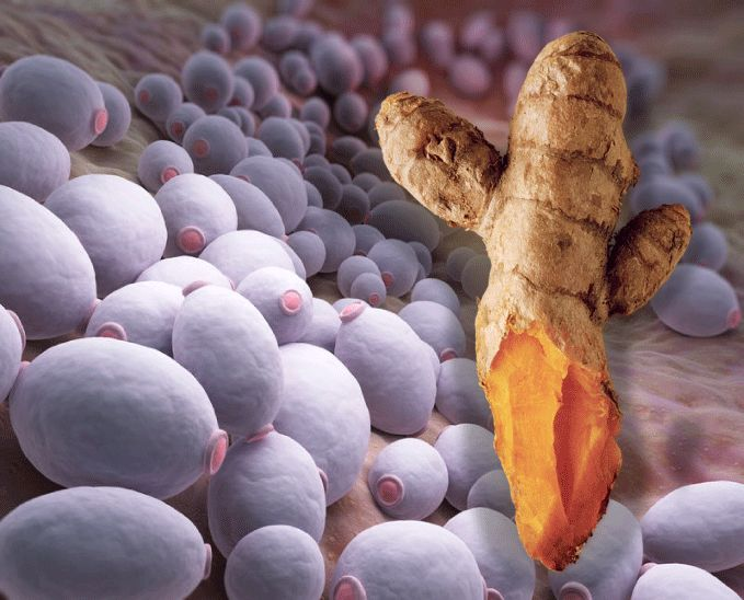 Yeast Is A Cause of Cancer And Turmeric Can Kill Both, Research Confirms