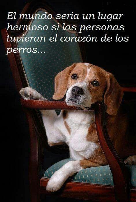 Verdad el amor de un perro es puro y si todos los humanos lo tuviéramos el mundo fuera hermoso
