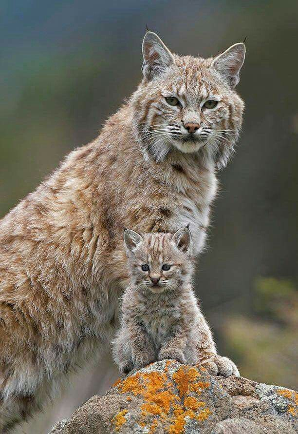 Mom and cub checking out the scenery.