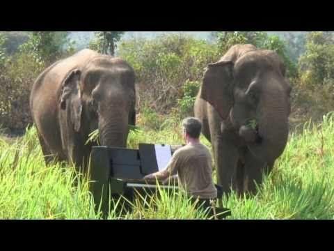 'The Elephant' by Saint-Saëns with real Thai Elephants