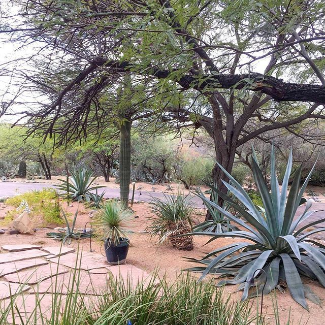 Starting A New Landscape Design Project With Some Great Existing Boxhillstyle Regram Via Bc 1tmuhgbe Landscape Design Outdoor Style Outdoor Pots