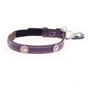 moet purple cat collar