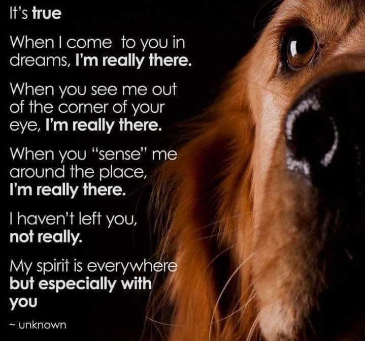 Loss Of Pet Quotes For Dogs: 25+ Best Ideas About Pet Remembrance On Pinterest