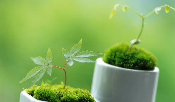 Обои на рабочий стол: весна, зеленые, зелень, листики, макро, растения, ростки