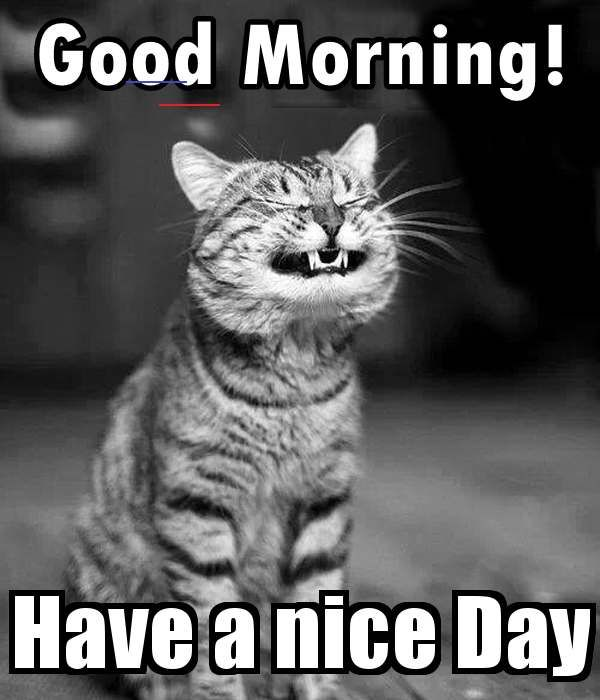 Good Morning Saturday Good Morning Saturday Wednesdayblessings Funny Good Morning Memes Morning Quotes Funny Good Morning Funny