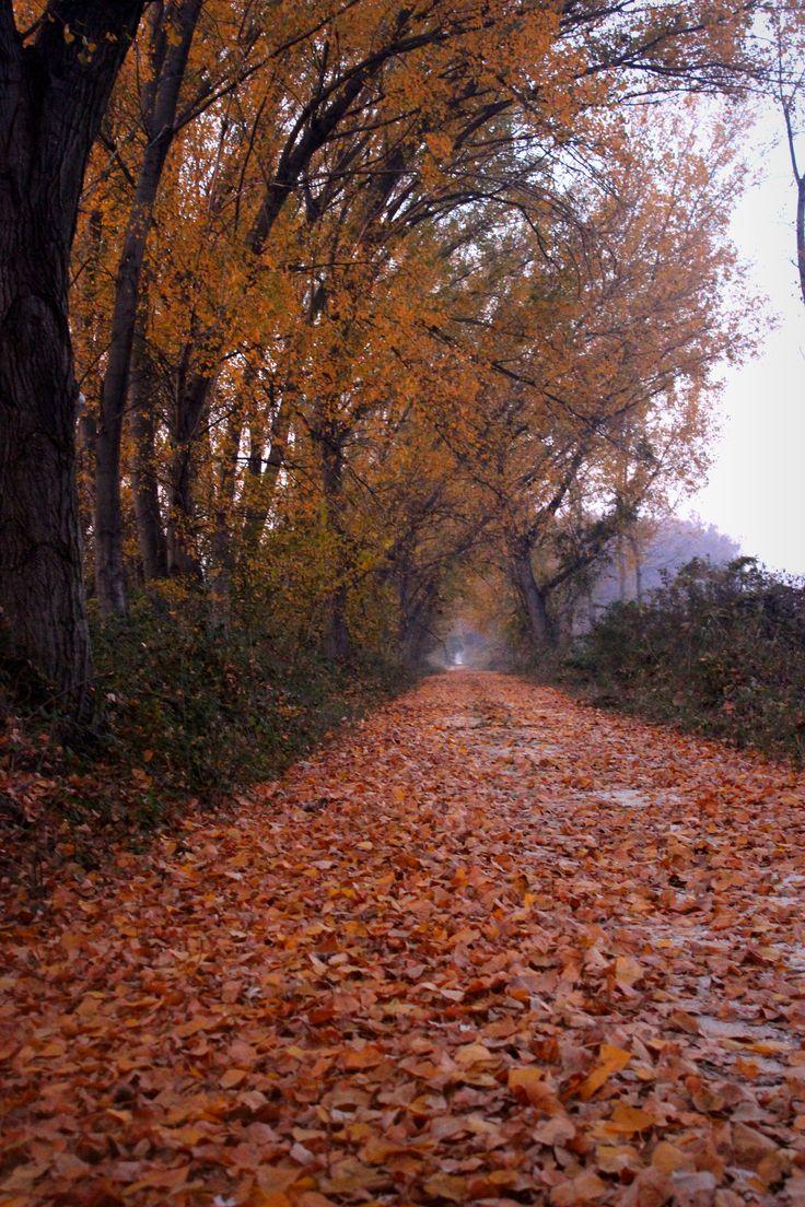 autumn beauty - Greece