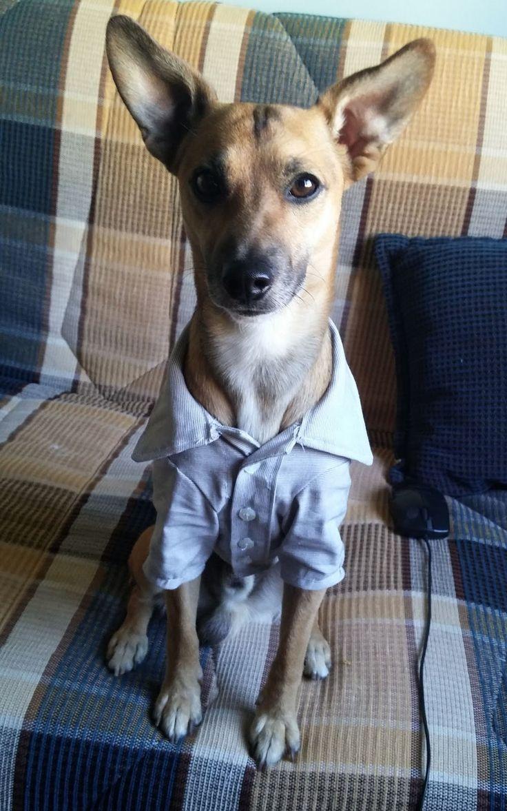 ....# Lilithin #....: Haydut Beyin Gömleği 2  Dog shirt