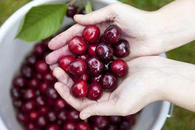 """Saludos amigos (as) de Remedios Natural ! ¿Sabía usted que las cerezas son conocidas como la """"super fruta"""" por su alto contenido en vita..."""