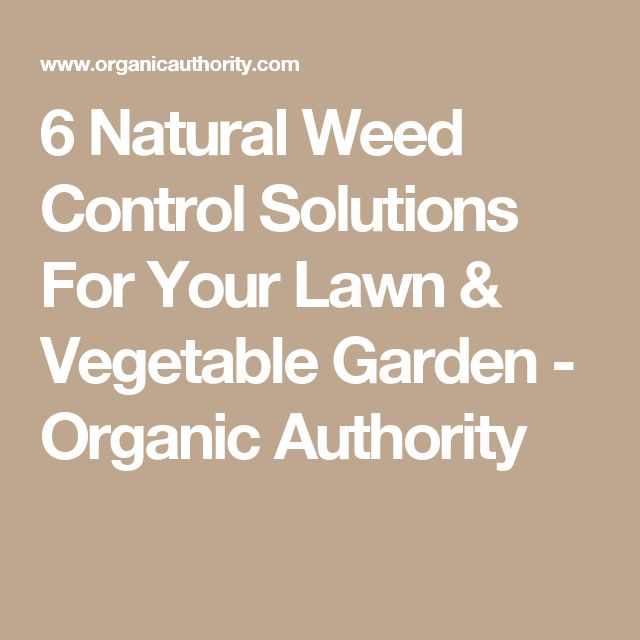 Best 25 weed control ideas on pinterest vinegar weed - Weed killer safe for vegetable garden ...