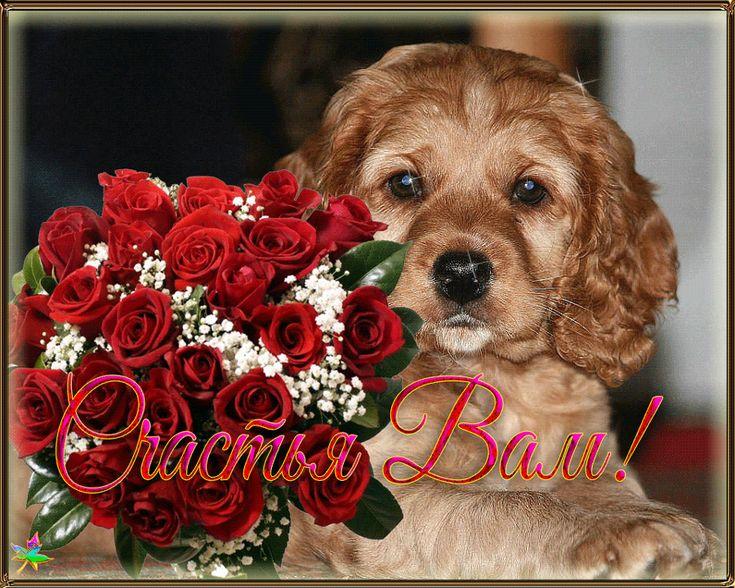 Хочу собаку открытка