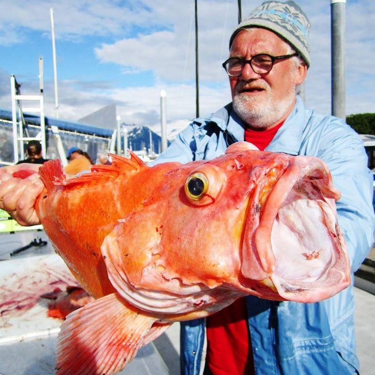 Catch of the day. Unser Tourguide Toni mit seinem Fang vom Hochseeangeln. Mein Schwiegervater hatte sogar einen 160 Pfund Heilbutt gefangen der musste erschossen werden um ihn an Bord zu bekommen   ein Jahr später war unsere Tiefkühltruhe immer noch am Bersten vor lauter Fisch. Je schwerer der ist desto älter ist er auch #logisch. Und desto muffiger schmeckt er auch  #20tage20länder #20days20countries #valdez #alaska #canada #redsnapper #halibut #fishing #angeln #catchoftheday…
