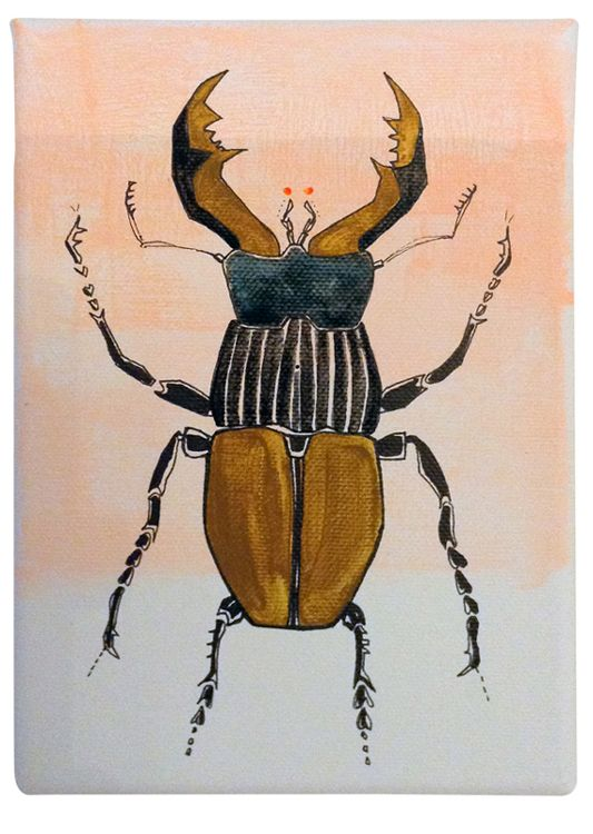 15 Best Insect Mounts Images On Pinterest Taxidermy