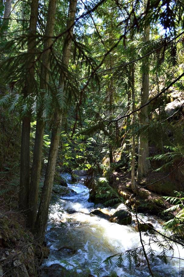 BX Falls Offers a Shaded Hike on a Hot Summer Day