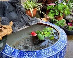 金魚 水草 - Google 検索