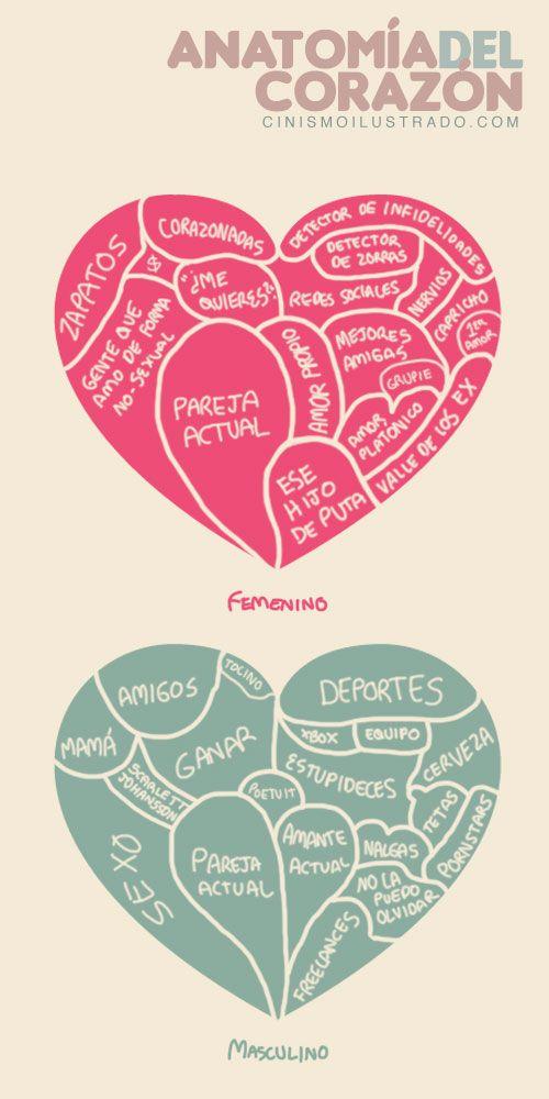 Anatomía del corazón femenino y masculino